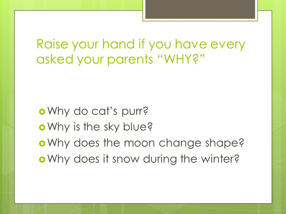 Raise your hand if you have every asked your parents WHY  Why do cat's purr.