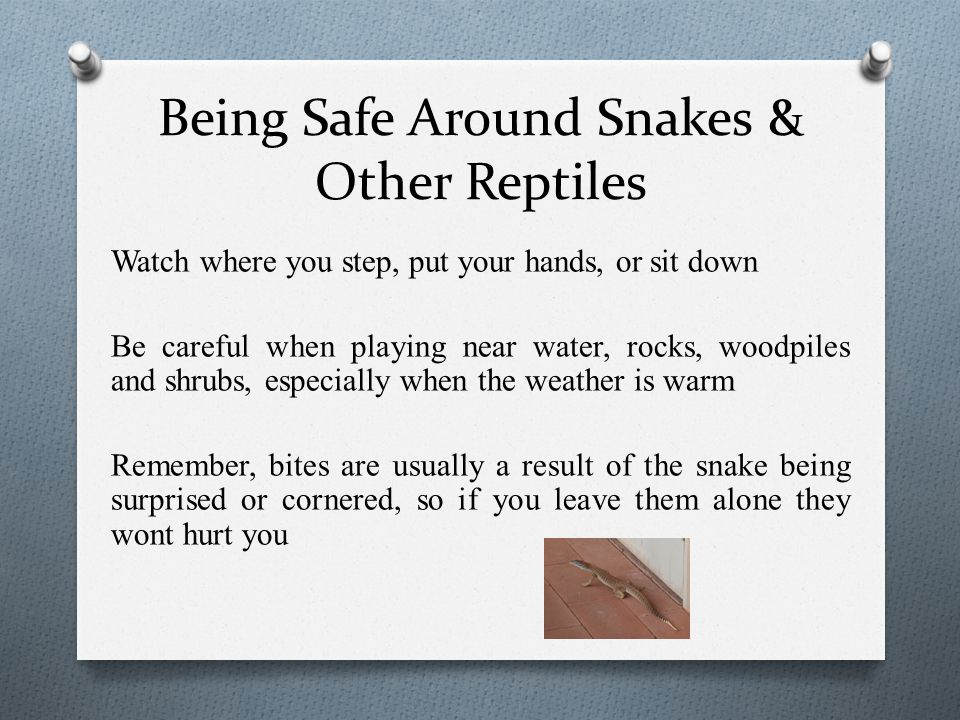 Being Safe Around Snakes & Other Reptiles Watch where you step, put your hands, or sit down Be careful when playing near water, rocks, woodpiles and s