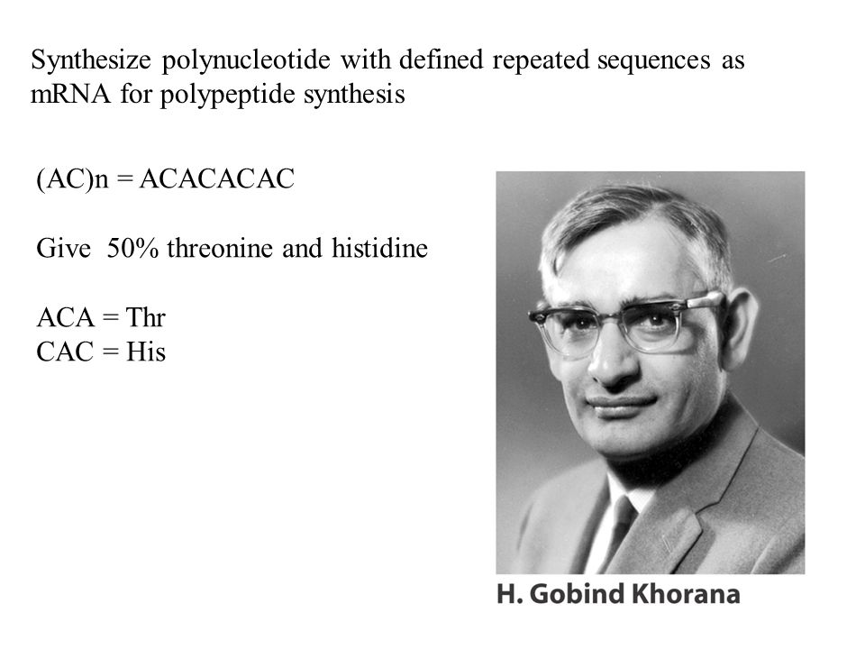 Synthesize polynucleotide with defined repeated sequences as mRNA for polypeptide synthesis (AC)n = ACACACAC Give 50% threonine and histidine ACA = Th