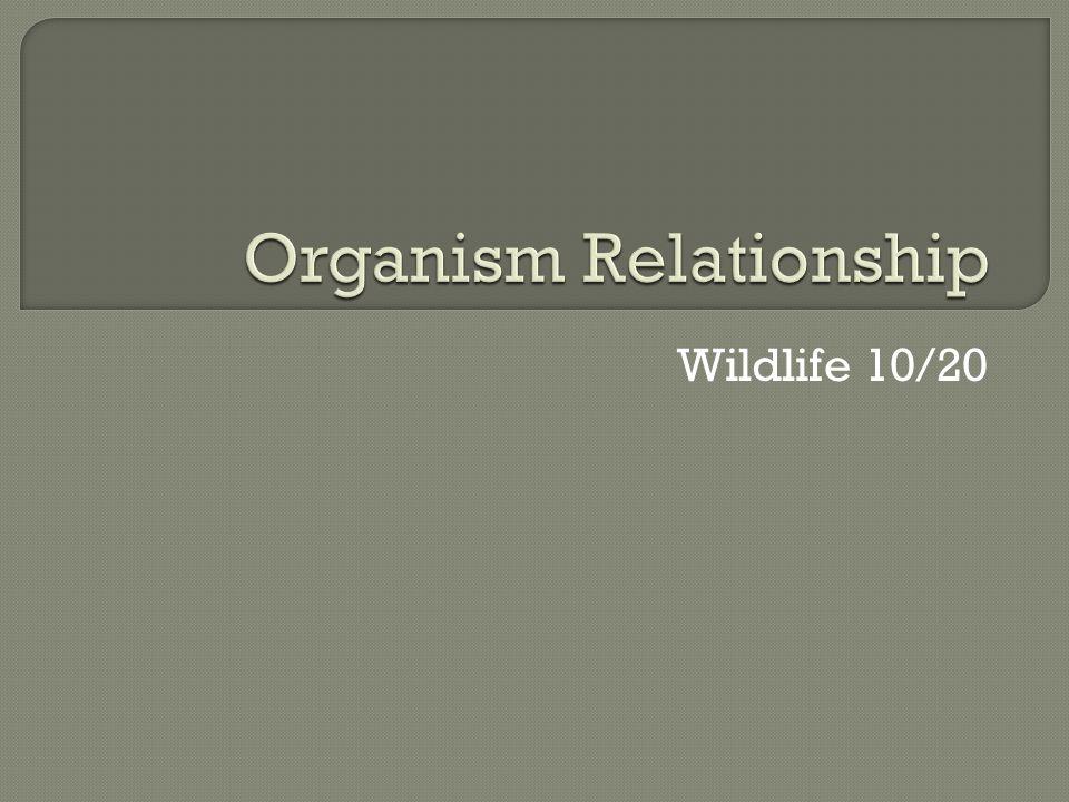 Wildlife 10/20