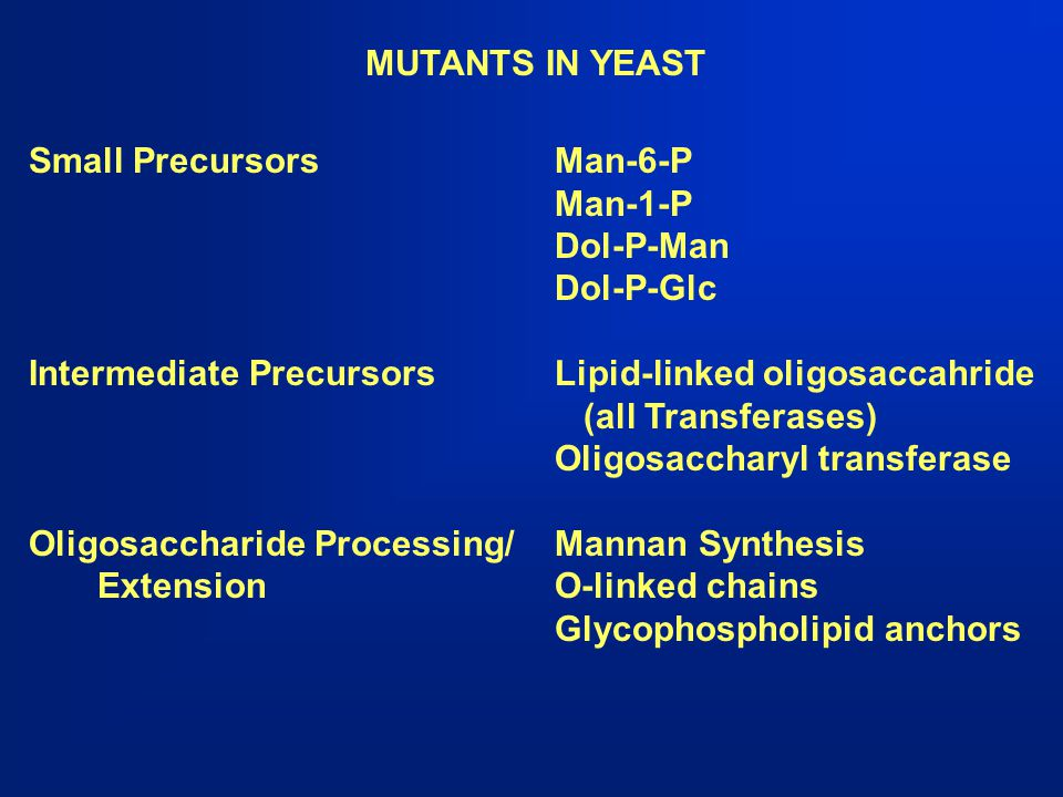 MUTANTS IN YEAST Small PrecursorsMan-6-P Man-1-P Dol-P-Man Dol-P-Glc Intermediate PrecursorsLipid-linked oligosaccahride (all Transferases) Oligosacch