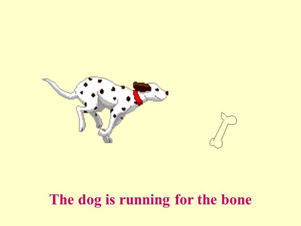 The dog is running for the bone