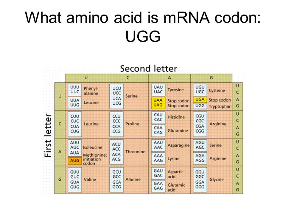 What amino acid is mRNA codon: UGG