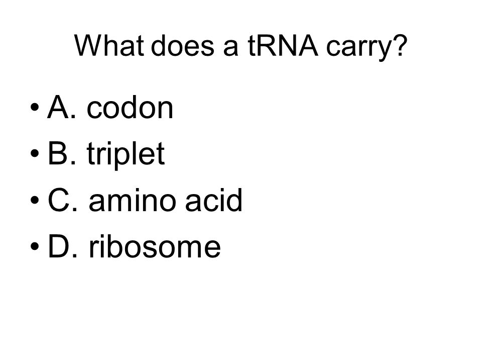 What does a tRNA carry A. codon B. triplet C. amino acid D. ribosome