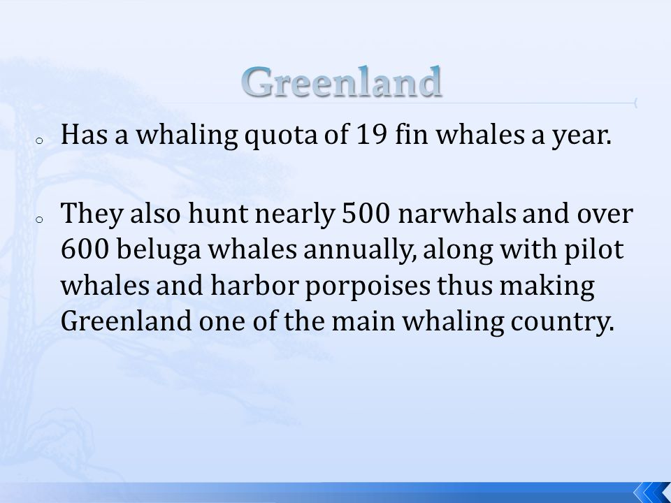 o Has a whaling quota of 19 fin whales a year.