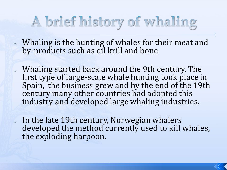 o Whaling is the hunting of whales for their meat and by-products such as oil krill and bone o Whaling started back around the 9th century.