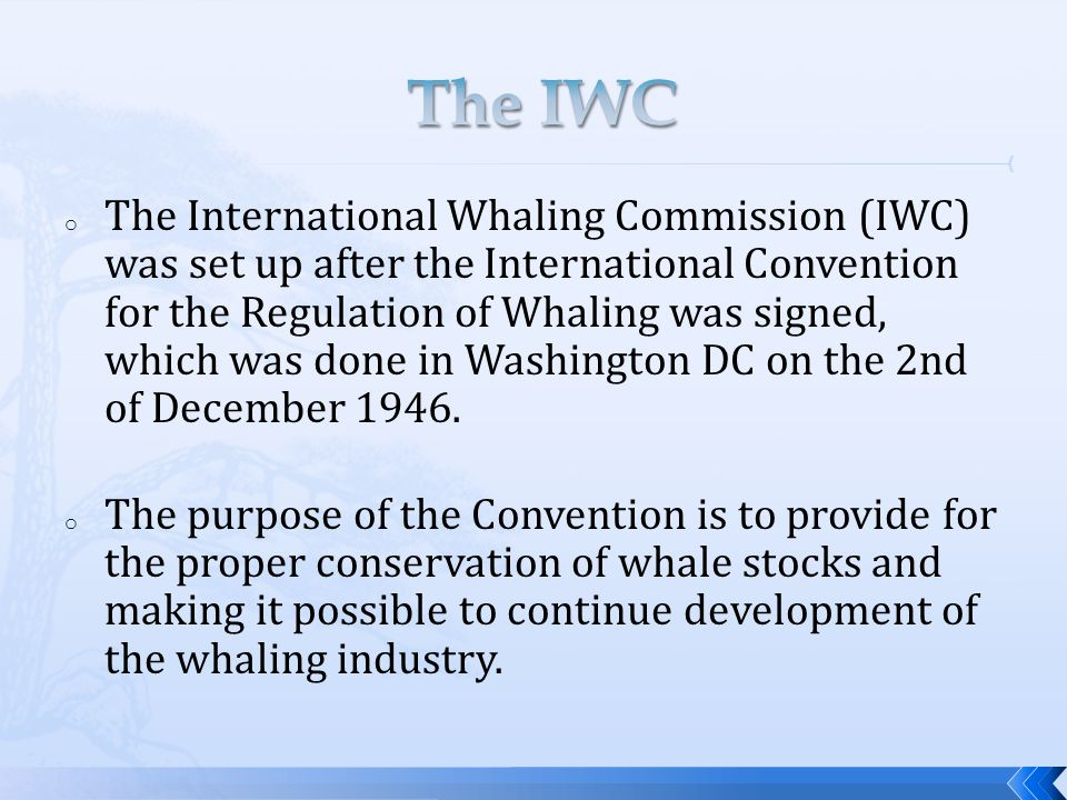 The main duties: o Protection of certain whale species o Setting up whale sanctuaries o Limit number and size of whales that can be taken o Set open and closed whaling seasons