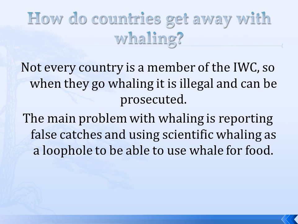 o Traditional whaling is still used by Inuit people.