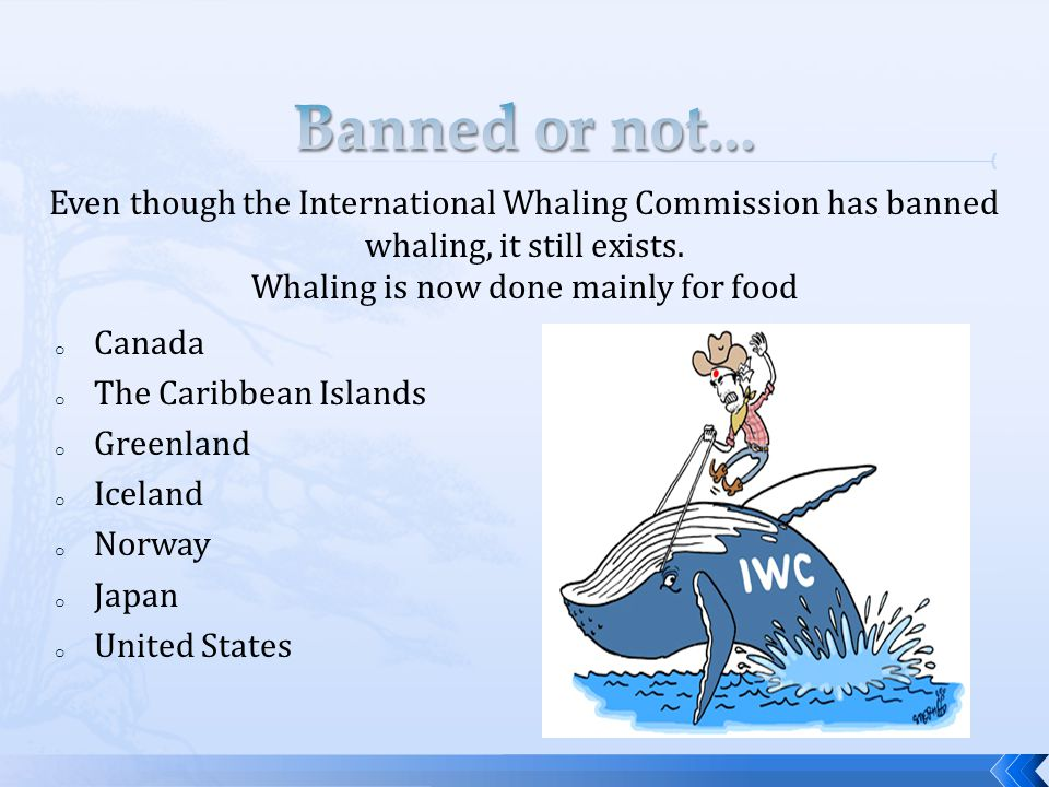 o Canada o The Caribbean Islands o Greenland o Iceland o Norway o Japan o United States Even though the International Whaling Commission has banned whaling, it still exists.
