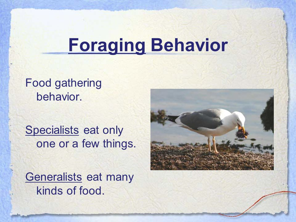 Foraging Behavior Food gathering behavior. Specialists eat only one or a few things. Generalists eat many kinds of food.