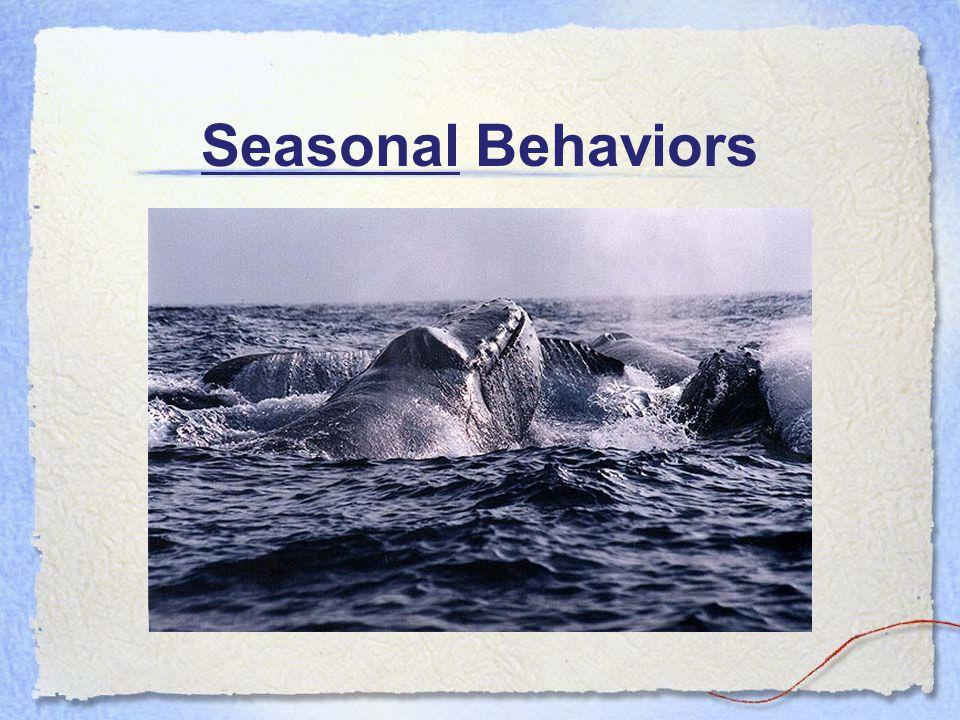 Seasonal Behaviors