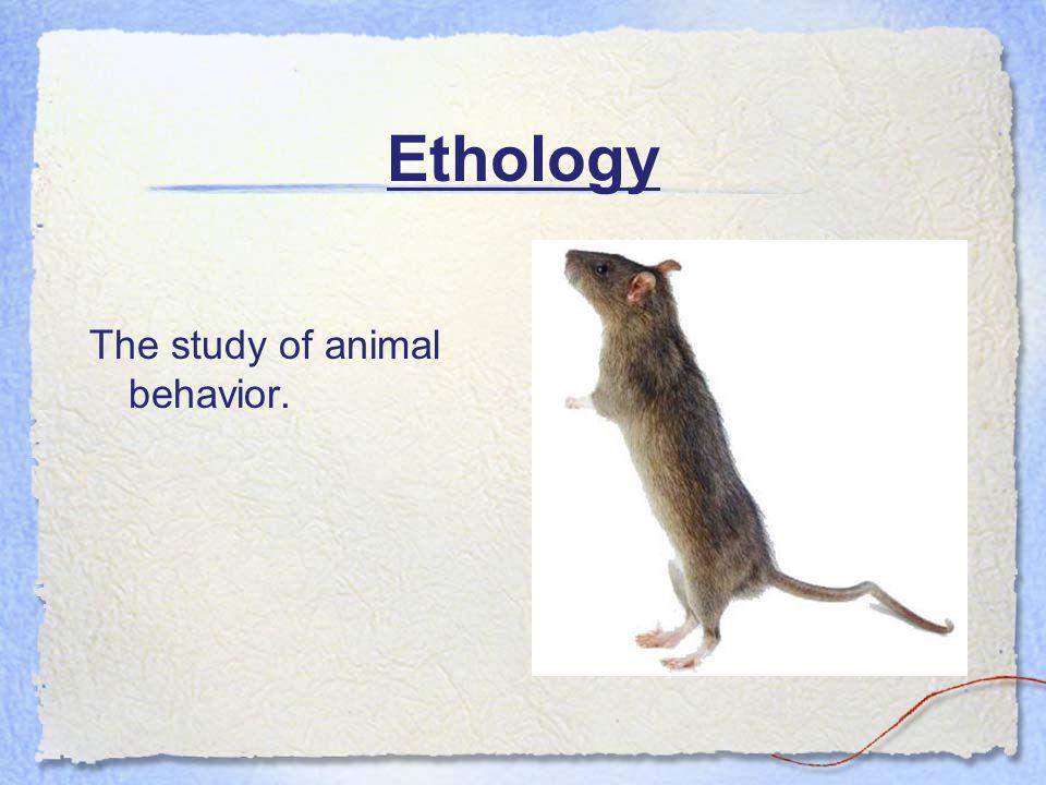 Ethology The study of animal behavior.