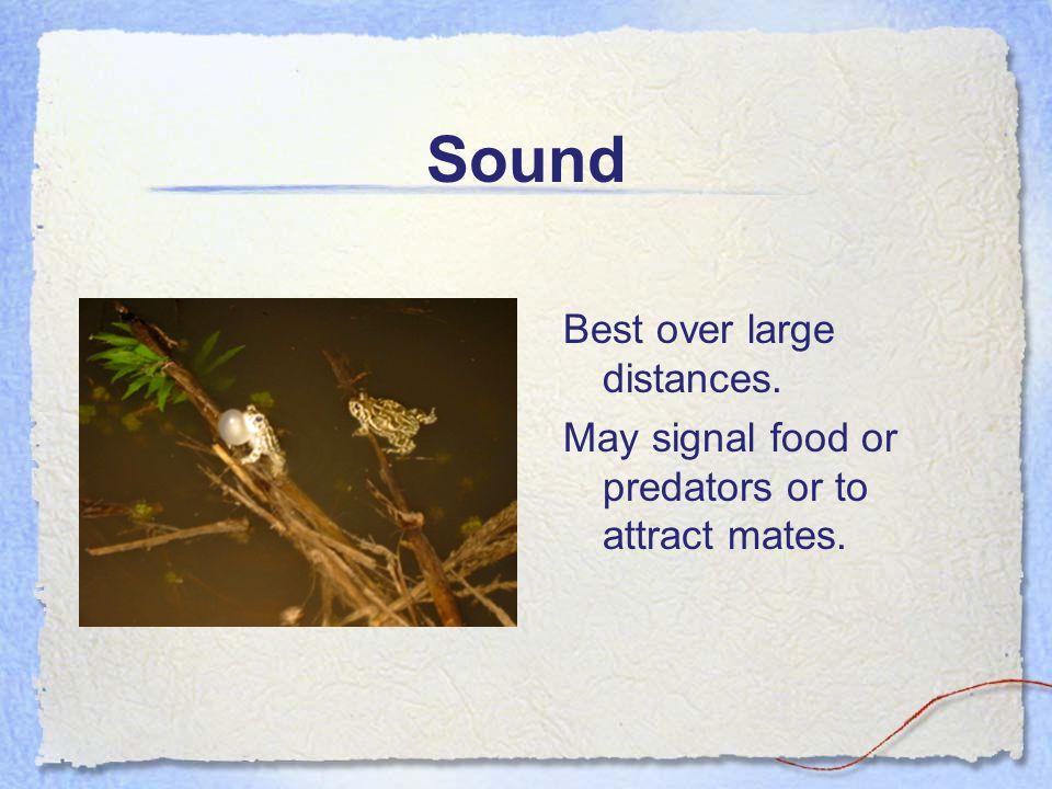 Sound Best over large distances. May signal food or predators or to attract mates.