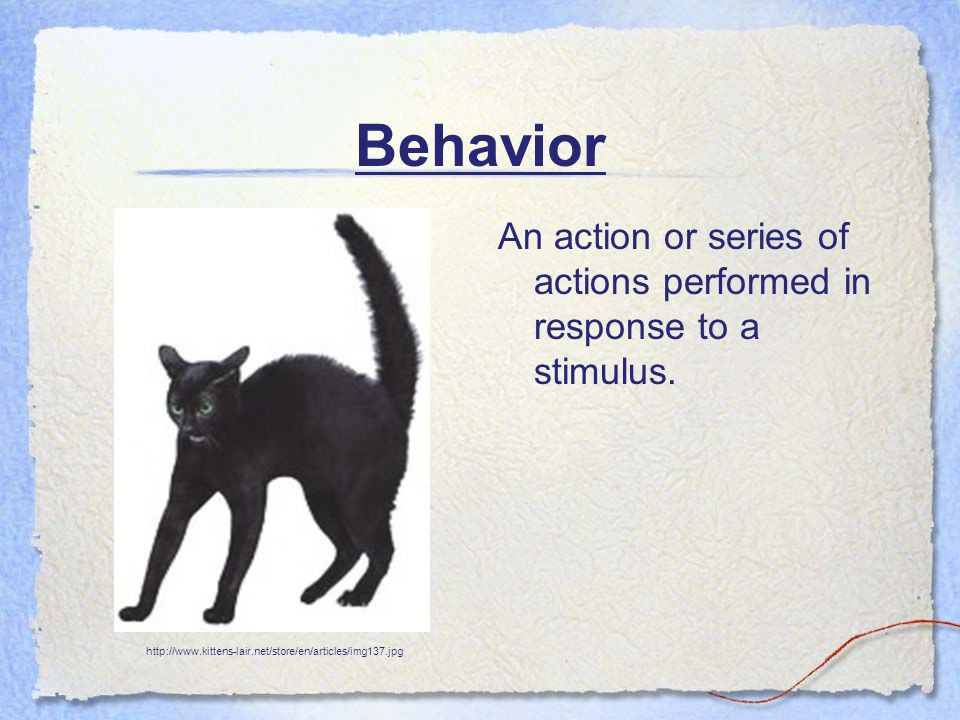 Behavior An action or series of actions performed in response to a stimulus. http://www.kittens-lair.net/store/en/articles/img137.jpg