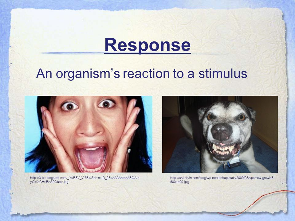 Response An organism's reaction to a stimulus http://3.bp.blogspot.com/_YuR6V_Yr7Bk/SblYmJD_28I/AAAAAAAABGA/q yCkiXCHrlE/s320/fear.jpg http://askdryin.com/blog/wp-content/uploads/2009/03/sparrow-growls5- 600x400.jpg