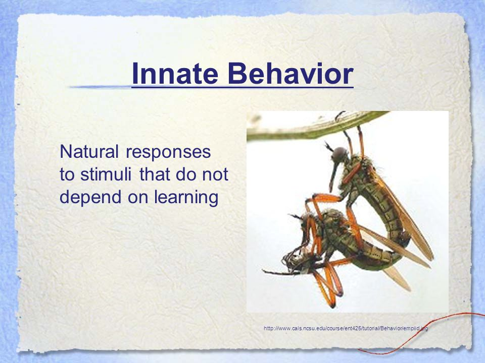 Innate Behavior Natural responses to stimuli that do not depend on learning http://www.cals.ncsu.edu/course/ent425/tutorial/Behavior/empiid.jpg