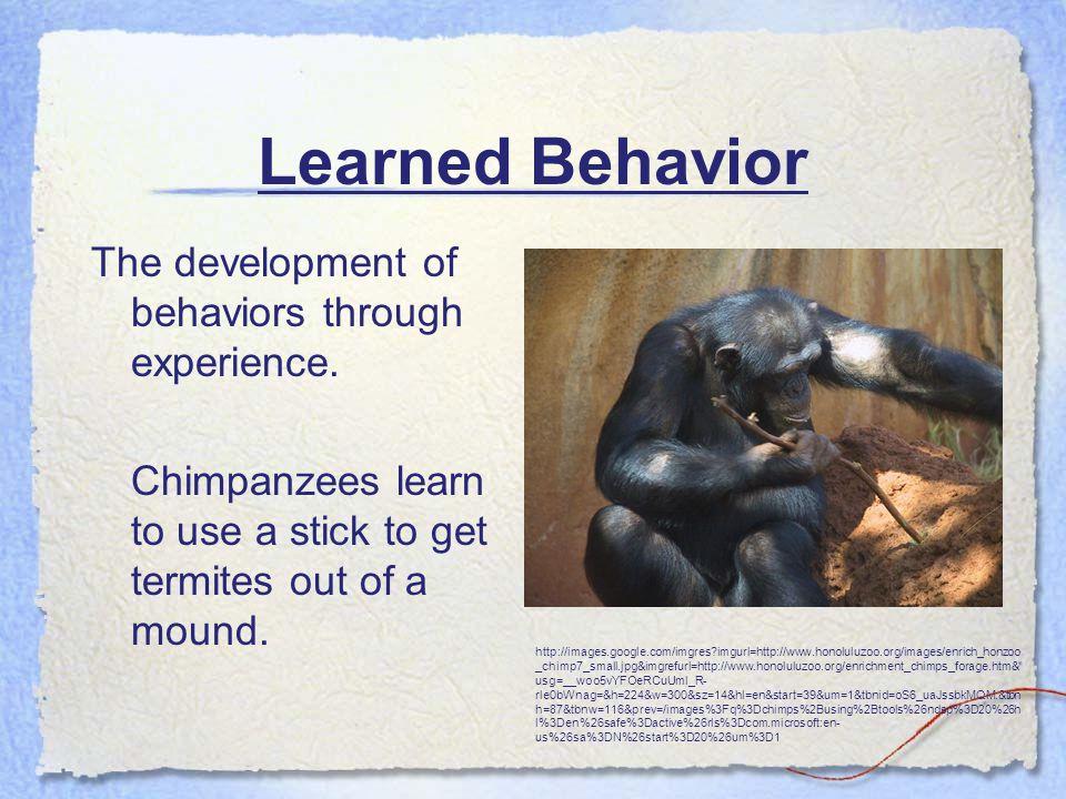 Learned Behavior The development of behaviors through experience.