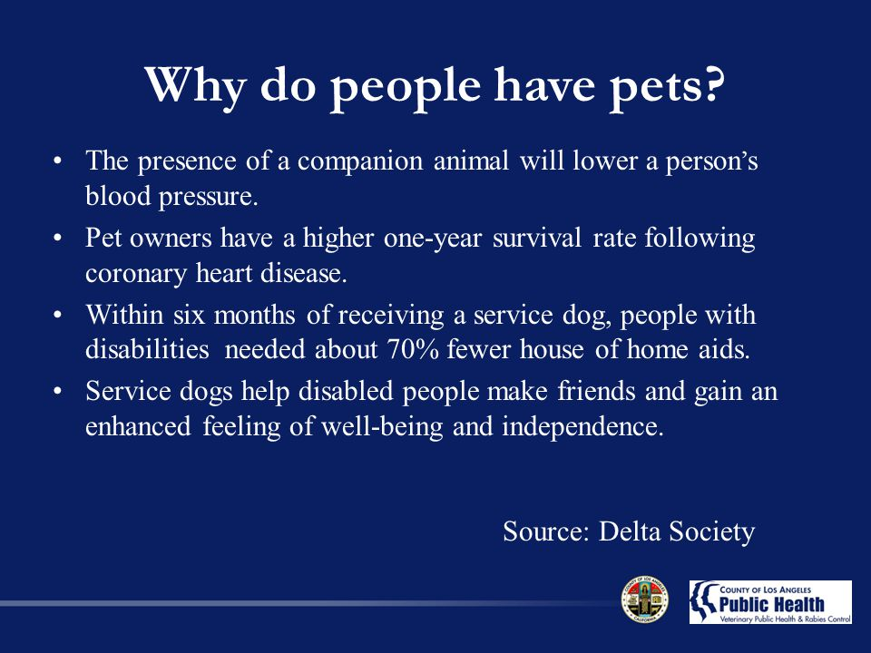 The presence of a companion animal will lower a person ' s blood pressure.