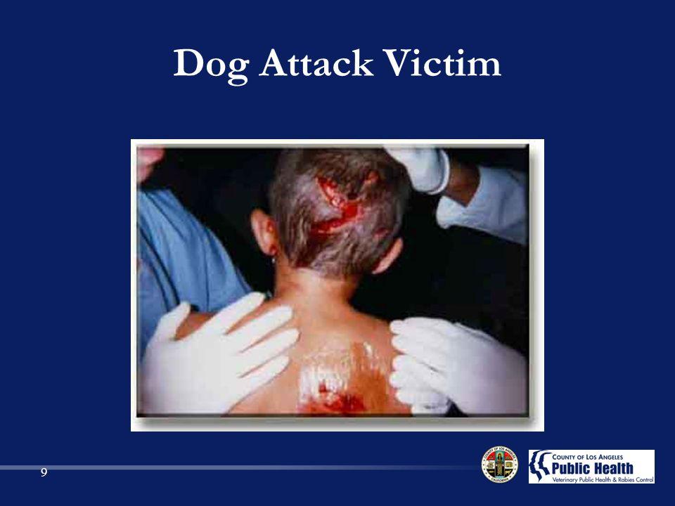 Dog Attack Victim 9