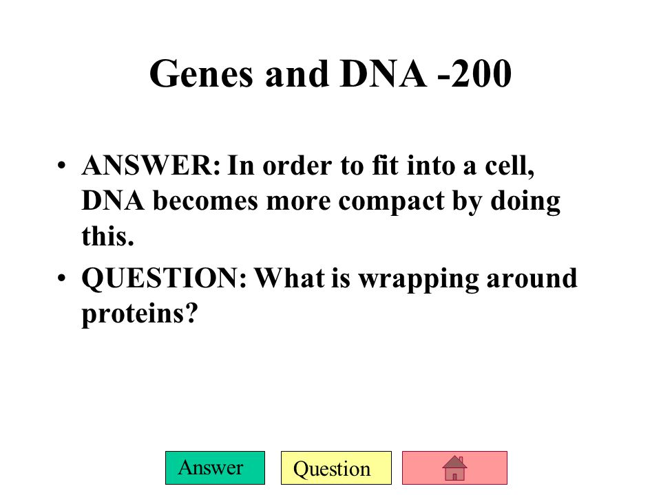 Question Answer Genes and DNA -100 ANSWER: Joined strands of duplicated DNA. QUESTION: What are chromatids?