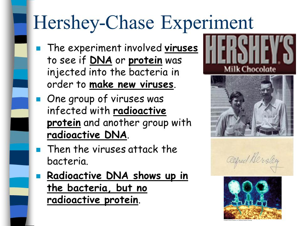 n The experiment involved viruses to see if DNA or protein was injected into the bacteria in order to make new viruses. n One group of viruses was inf