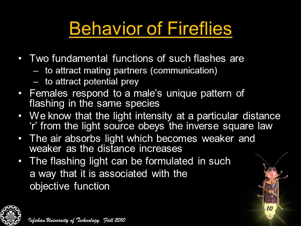 10 Behavior of Fireflies Two fundamental functions of such flashes are – to attract mating partners (communication) – to attract potential prey Female