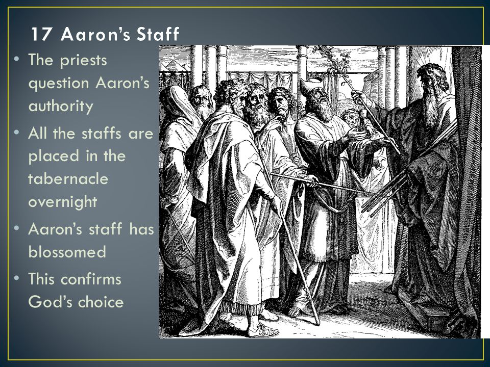 The priests question Aaron's authority All the staffs are placed in the tabernacle overnight Aaron's staff has blossomed This confirms God's choice