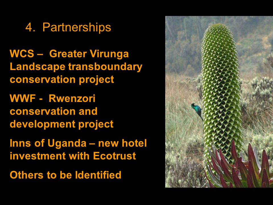 4. Partnerships WCS – Greater Virunga Landscape transboundary conservation project WWF - Rwenzori conservation and development project Inns of Uganda
