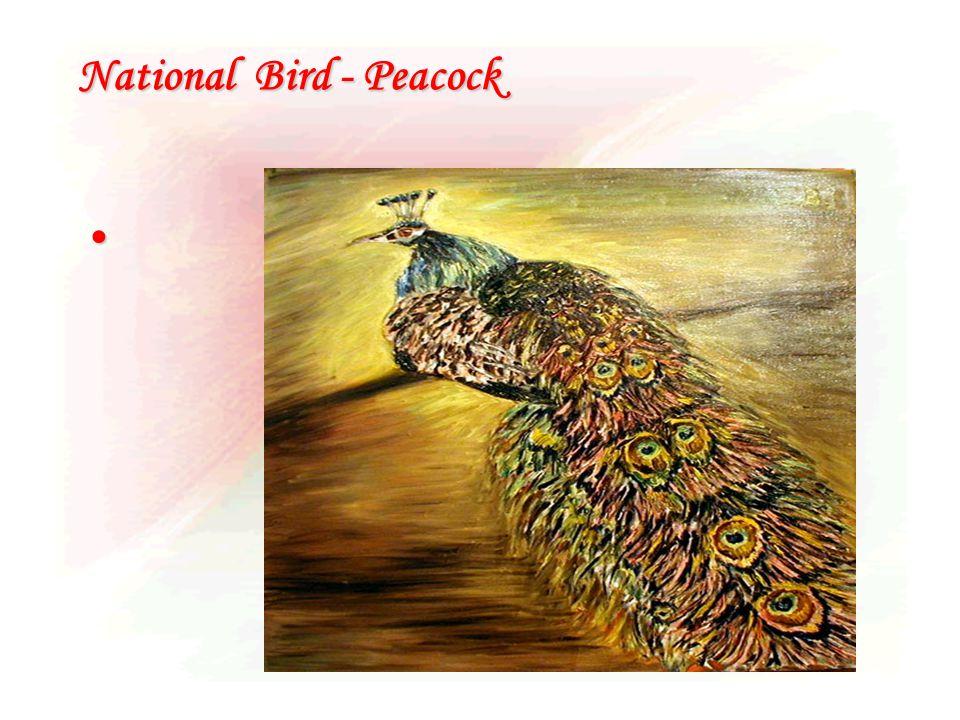 National Bird - Peacock