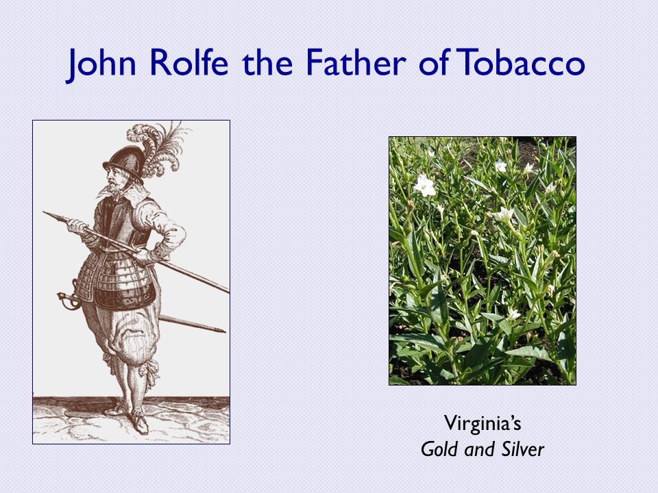 John Rolfe the Father of Tobacco Virginia's Gold and Silver
