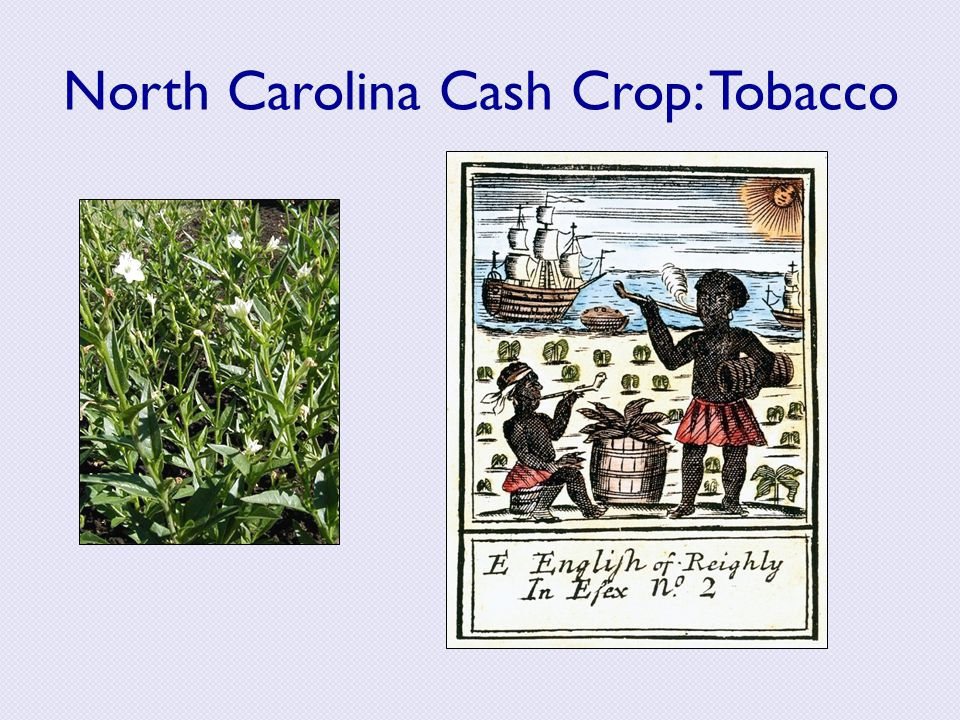 North Carolina Cash Crop: Tobacco