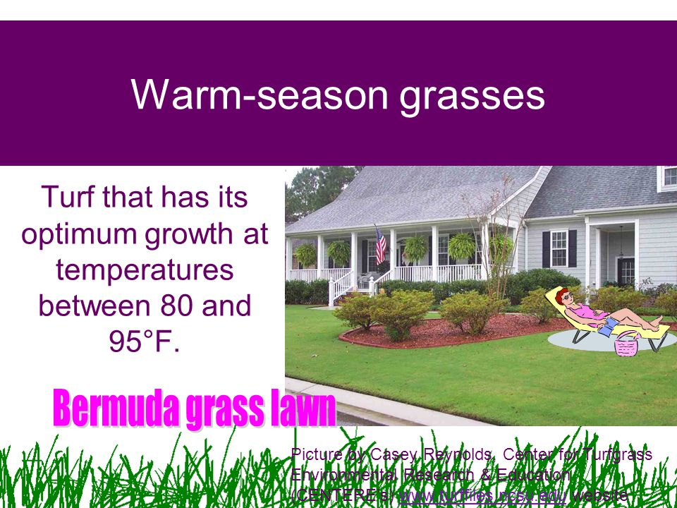 Warm-season grasses Turf that has its optimum growth at temperatures between 80 and 95°F. Picture by Casey Reynolds, Center for Turfgrass Environmenta
