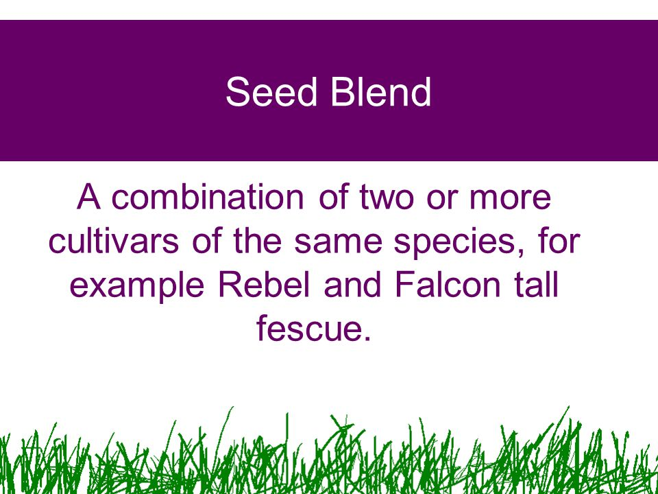 Seed Blend A combination of two or more cultivars of the same species, for example Rebel and Falcon tall fescue.