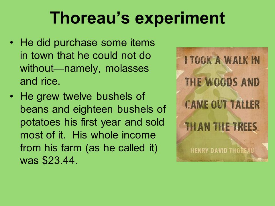 Thoreau's experiment He did purchase some items in town that he could not do without—namely, molasses and rice. He grew twelve bushels of beans and ei