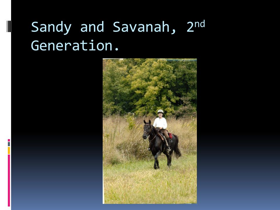 Sandy and Savanah, 2 nd Generation.