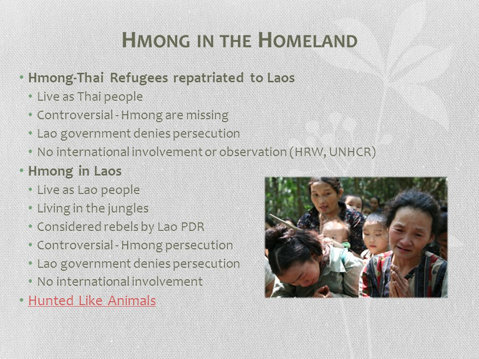 H MONG IN THE H OMELAND Hmong-Thai Refugees repatriated to Laos Live as Thai people Controversial - Hmong are missing Lao government denies persecution No international involvement or observation (HRW, UNHCR) Hmong in Laos Live as Lao people Living in the jungles Considered rebels by Lao PDR Controversial - Hmong persecution Lao government denies persecution No international involvement Hunted Like Animals