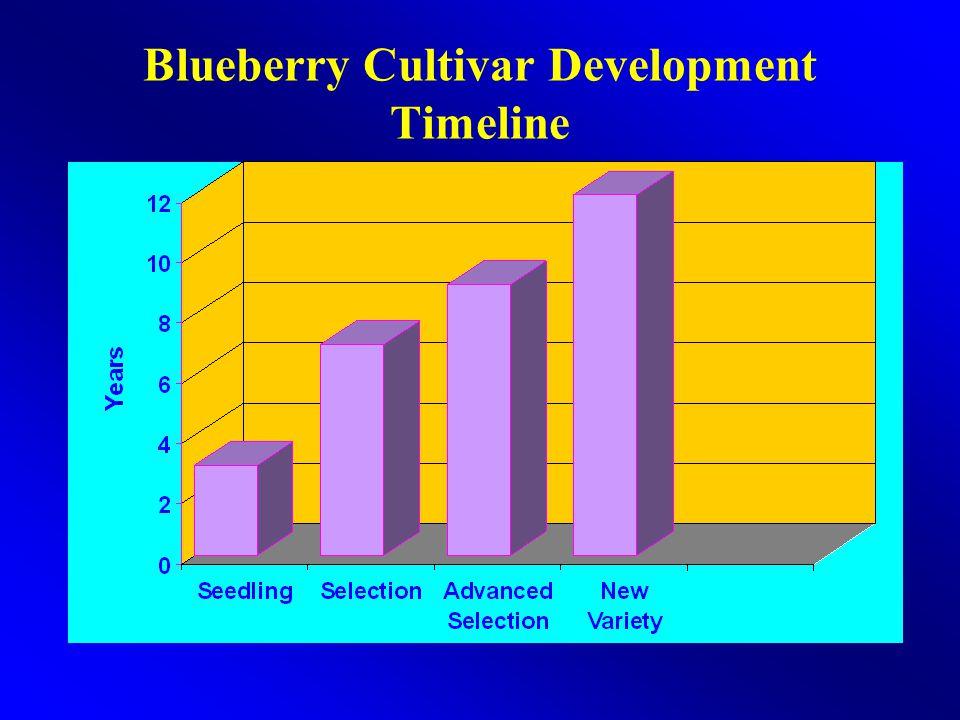 Blueberry Cultivar Development Timeline