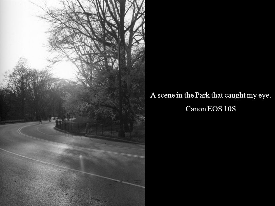 A scene in the Park that caught my eye. Canon EOS 10S