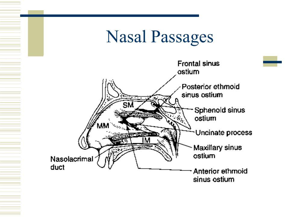 Nasal Passages