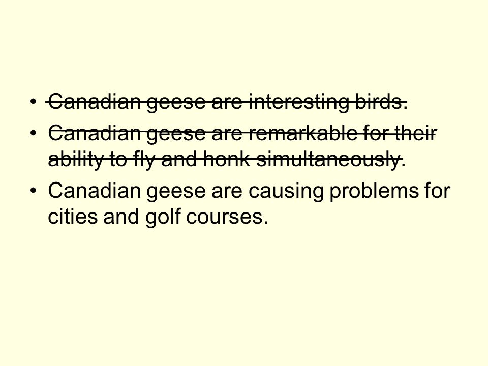 Canadian geese are interesting birds. Canadian geese are remarkable for their ability to fly and honk simultaneously. Canadian geese are causing probl