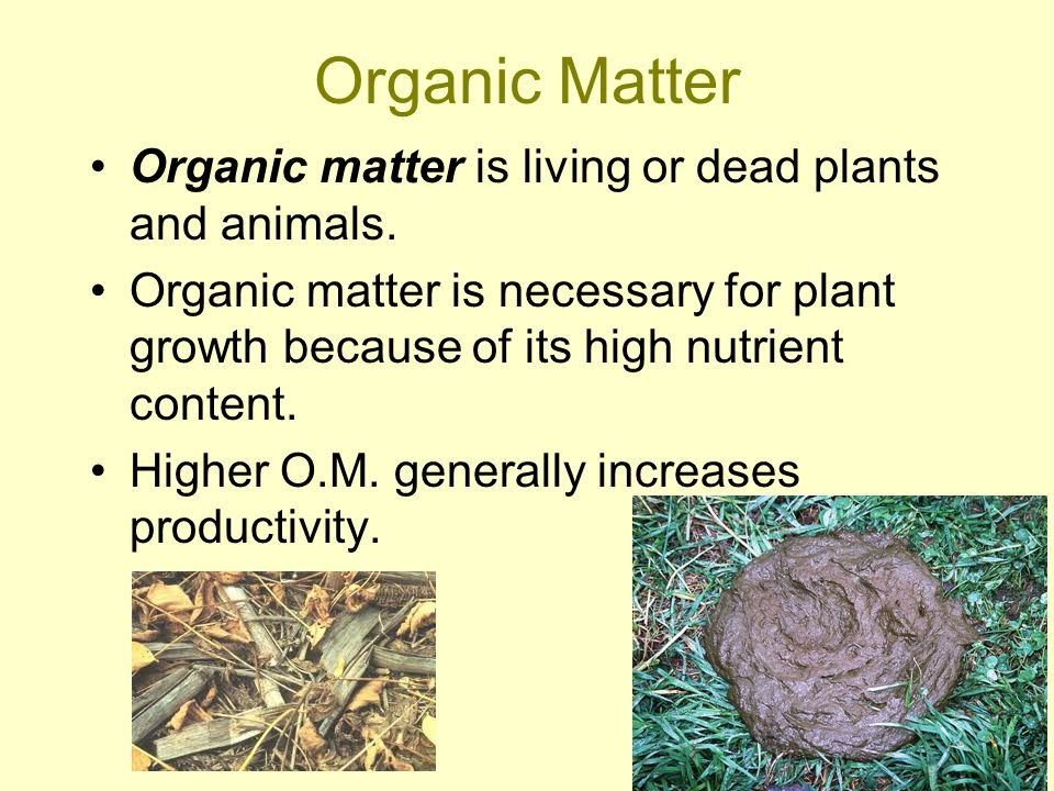 Organic Matter Organic matter is living or dead plants and animals.