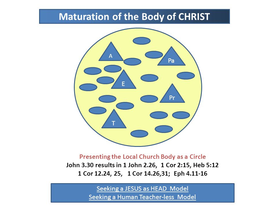 Presenting the Local Church Body as a Circle John 3.30 results in 1 John 2.26, 1 Cor 2:15, Heb 5:12 1 Cor 12.24, 25, 1 Cor 14.26,31; Eph 4.11-16 A T E Pr Pa Seeking a JESUS as HEAD Model Seeking a Human Teacher-less Model Maturation of the Body of CHRIST