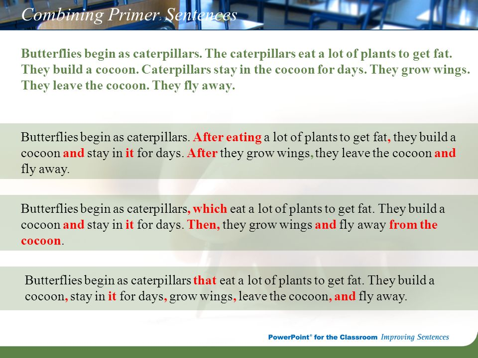 Combining Primer Sentences Butterflies begin as caterpillars. The caterpillars eat a lot of plants to get fat. They build a cocoon. Caterpillars stay