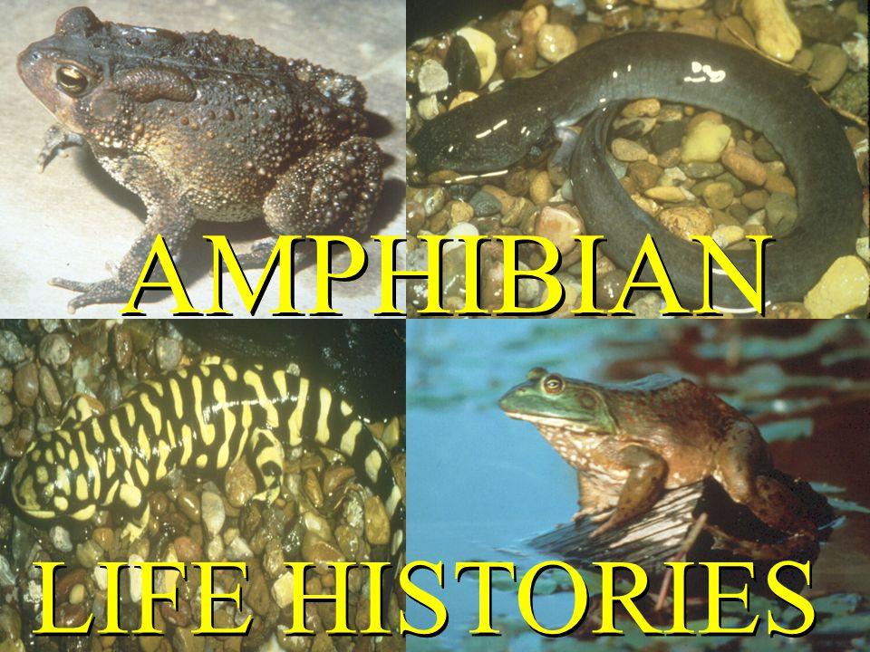 AMPHIBIAN LIFE HISTORIES