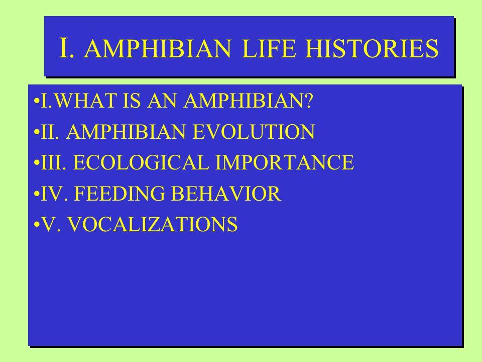 I.AMPHIBIAN LIFE HISTORIES I.WHAT IS AN AMPHIBIAN.