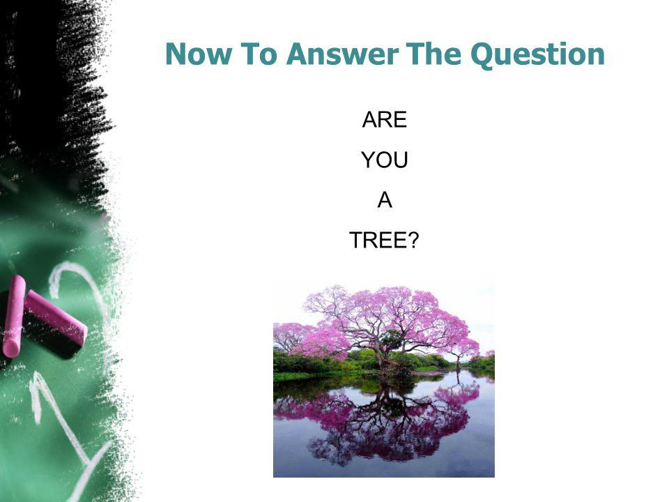 Now To Answer The Question ARE YOU A TREE?