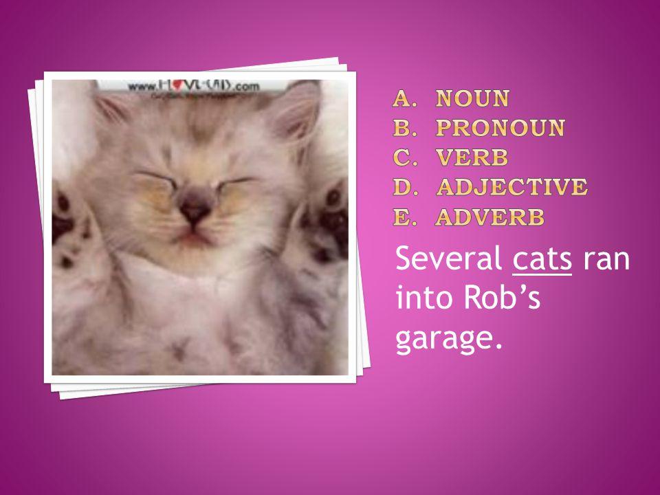 Several cats ran into Rob's garage.