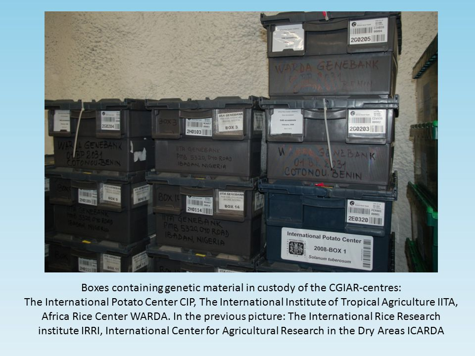Boxes containing genetic material in custody of the CGIAR-centres: The International Potato Center CIP, The International Institute of Tropical Agricu