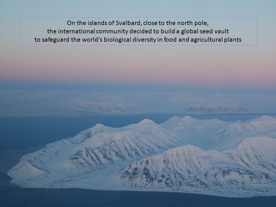 On the islands of Svalbard, close to the north pole, the international community decided to build a global seed vault to safeguard the world's biologi