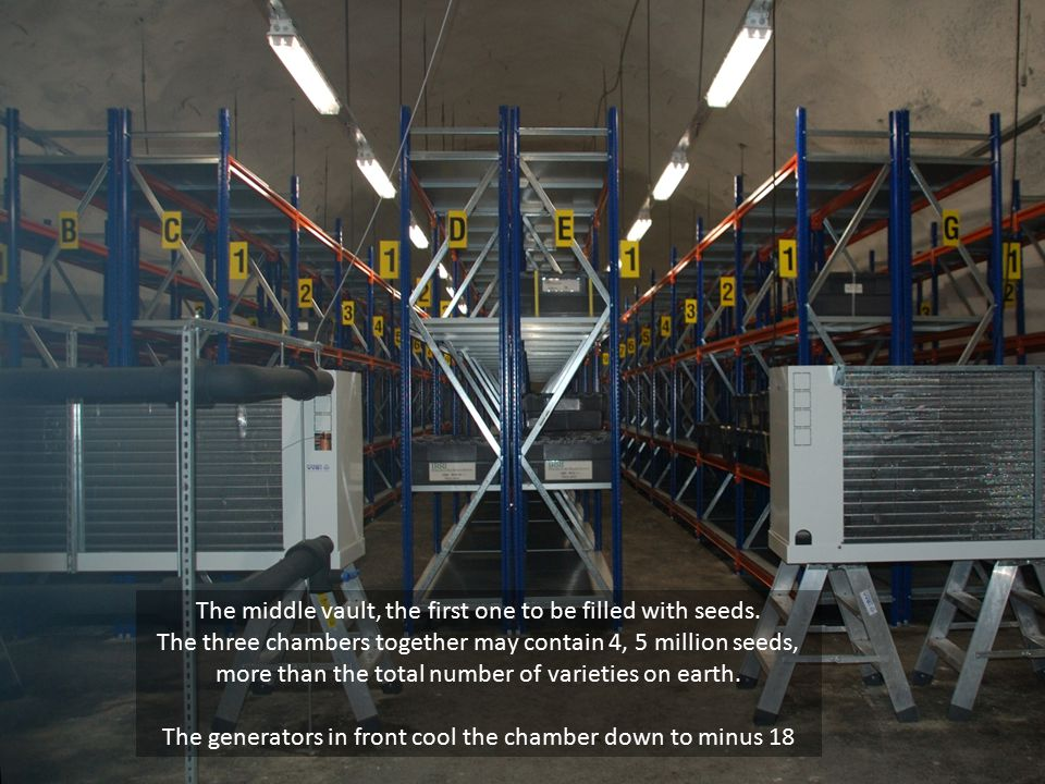 The middle vault, the first one to be filled with seeds. The three chambers together may contain 4, 5 million seeds, more than the total number of var